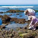 La Jolla Calendar of Events – February to May