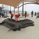 Things To Do With Kids in La Jolla