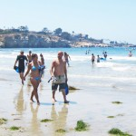 Leopard Sharks at La Jolla Shores